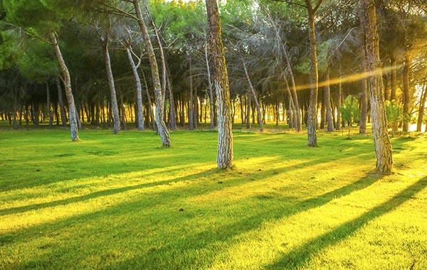 zonas verdes, instalaciones, caravaning valladolid, zona de descanso, camping